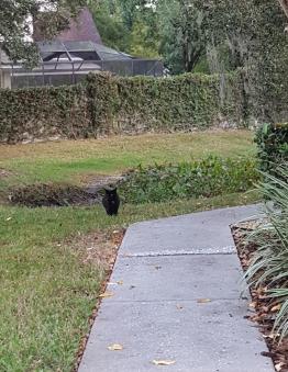 Black Kittie going solo